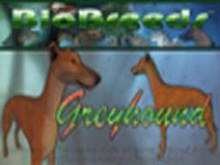 BioBreeds (BB) Dog FEMALE Greyhound STARTER (Boxed)