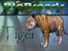 BioBreeds (BB) Wild Ones MALE Tiger STARTER (Boxed)