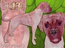 BioBreeds (BB) Dog FEMALE SL13B EPIC Boxer STARTER (Boxed)