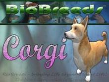 BioBreeds (BB) Dog FEMALE CORGI STARTER (Boxed)