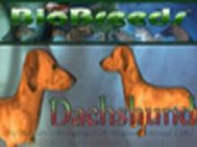 BioBreeds (BB) Dog FEMALE Dachshund STARTER (Boxed)