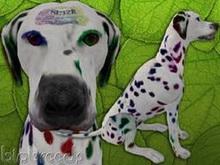 BioBreeds (BB) Dog MALE SL12B EPIC Dalmatian STARTER (Boxed)