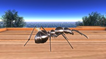 [Eclectique] Ant Large