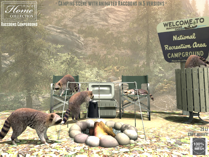 Raccoons, Campground