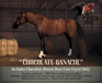"""The Painted Pony~ """"Chocolate Ganache"""" Brown Coat for *WH* Riding Horse"""