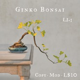 Ginko Bonsai Tree (LI=1)