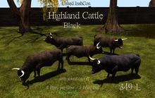 *UI* Highland Cattle Black v