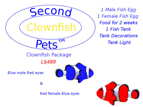 Two Clownfish eggs Blue & Red