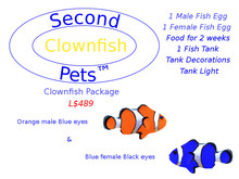 Two Clownfish Eggs Orange & Blue