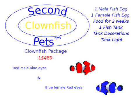 Two Clownfish Eggs Red & Blue