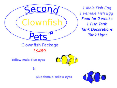 Two Clownfish Eggs Yellow & Blue