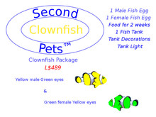 Two Clownfish Eggs Yellow & Green