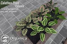 [ Organica ] Calathea Plant (Fatpack)