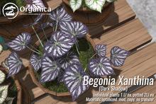 [ Organica ] BegoniaXanthina - Dark Shadows