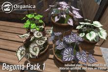 [ Organica ] Begonia Pack 1