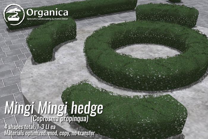 [ Organica ] Mingimingi Hedges