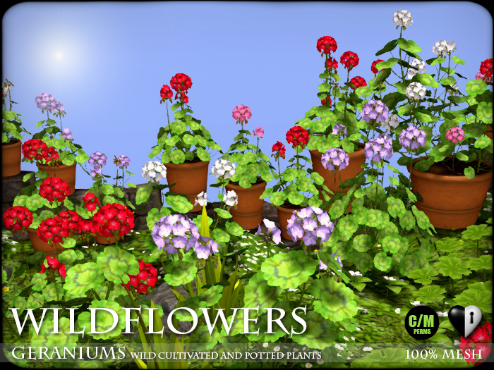 Heart - Wildflowers - Geraniums