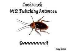 Cockroach With Animated Antennae - Ick!