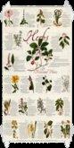 Herbal Poster