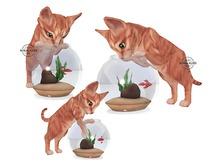 Jian Curious Kitties ♥ Betta Bowl ♥ RARE
