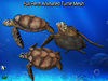 Full Perm Amazing Animated Turtle High Quality Mesh
