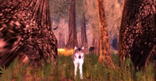 Wolf Watcher Gold Picture frame