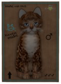 KittyCatS Box - M Bengal Copper Ice Crystal Natural 2x Genesis