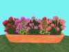 Geranium Flowerbox 1