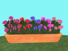 Geranium Flowerbox/Planter 3