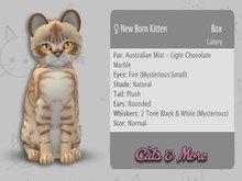 KittyCatS Box - ♀ Australian Mist - Light Chocolate Marble