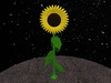 Sunflower%203d 1