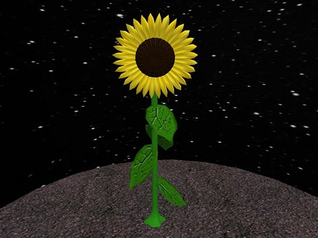 Three dimensional Sunflower