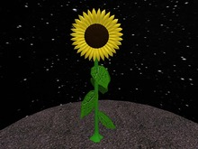 Three dimensional Sunflower
