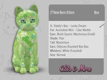 KittyCatS Box - ♂ St. Paddy's Boy - Lucky Dream