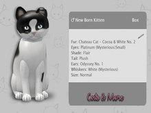 KittyCatS Box - ♂  Chateau Cat - Cocoa & White No. 2