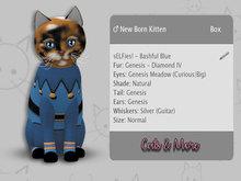 KittyCatS Box - ♂  sELFies! - Bashful Blue