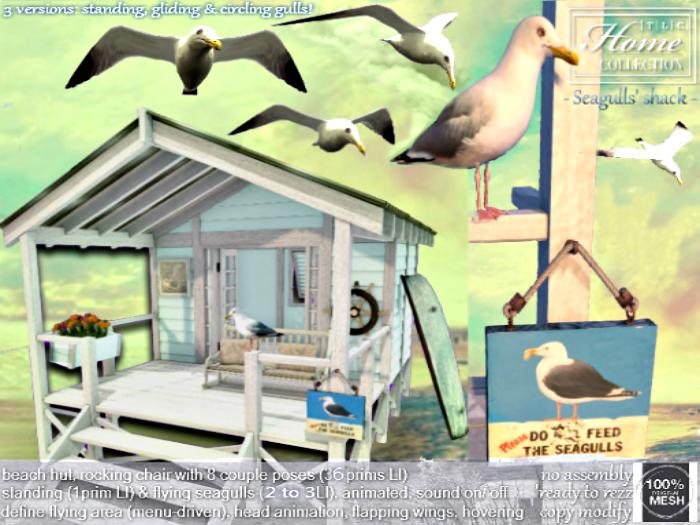 Beach, hut, seagull, gull