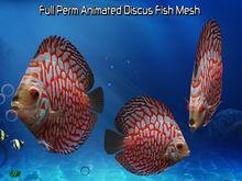 Full Perm Amazing Animated Discus Fish HQ Mesh