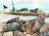 Tlc sealion colony   floating raft less contrast text
