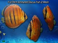 Full Perm Amazing Animated Discus Fish 2  HQ Mesh