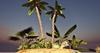 CJ Tropical little Isle + Palm  c+m