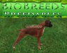 BB BioBreeds Sterling Boxer unbirthed Ready for Home