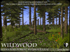 Heart   wildwood   wild sitka pine forest modules  a2