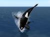 Orca Offsim! New!
