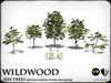 Wildwood - Ash trees - Season Changing
