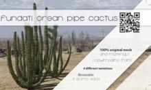 (Fundati) Organ Pipe Cactus