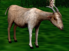 *NEW* Animated-Mesh Peaceful (Roaming) GOAT and Gor-VERR