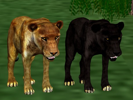 *NEW* Animated-Mesh Peaceful (Roaming) COUGAR-PANTHER