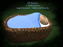 BB Bunny Boxes  5 Male  Size Normal