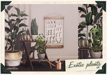 {vespertine}- exotic plants  FATPACK bx.